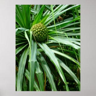Screw-pine or Hala fruit Poster