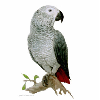 Sculpture - African Grey Parrot Standing Photo Sculpture