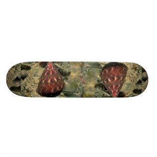Sculptured top shell Calliostoma euglyptum Shell Skate Board Deck