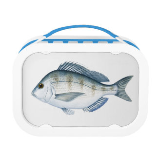 Scup Fish Lunchboxes