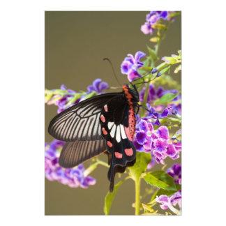 SE Asia, Thailand, Doi Inthanon, Papilio Photo Print