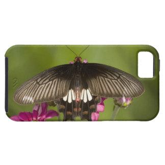 SE Asia, Thailand, Doi Inthanon, Papilio polytes iPhone 5 Cases