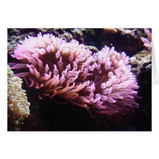 Sea Anemone Card