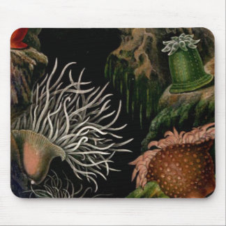 Sea Anemone Nautical SeaLife Mousepad Desk/Office