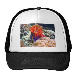 sea apple hats