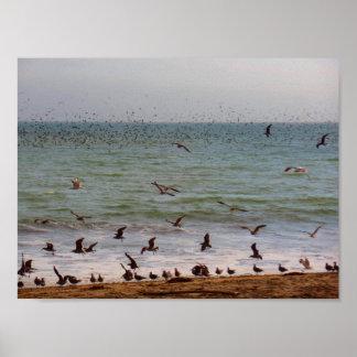 Sea Bird Swarm at California Beach Poster