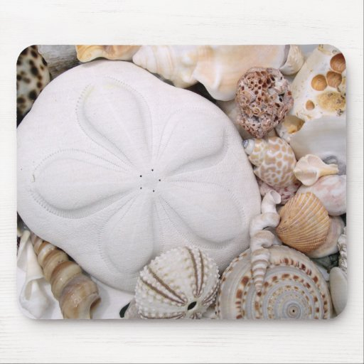 Sea Biscuit Sand Dollar Mouse Pads