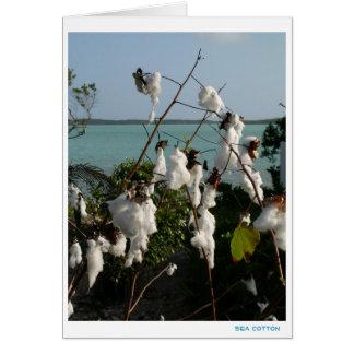 Sea Cotton Card