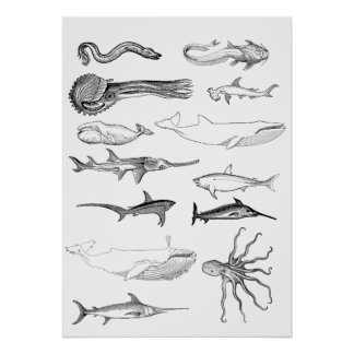 Sea creatures wall art