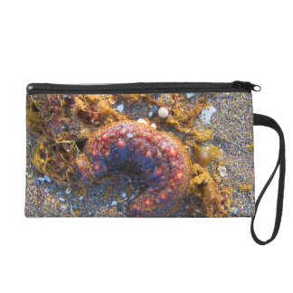 sea cucumber seaweed red creature wristlet clutches