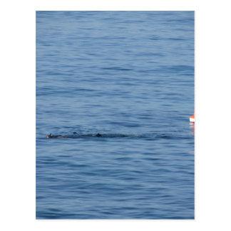 Sea diver in scuba suit swim in water postcard
