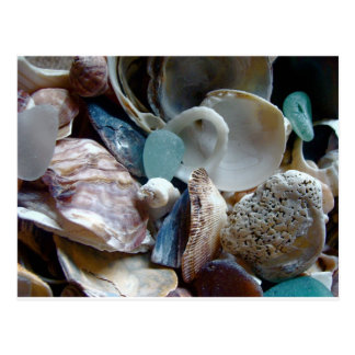 Sea Glass Shell Collected Postcard