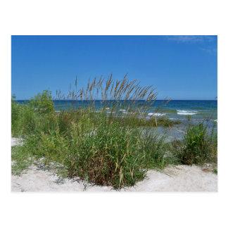 Sea Grass along the seashore Post Card