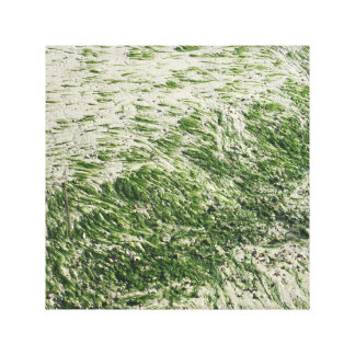 Sea Grass at Low Tide Stretched Canvas Print