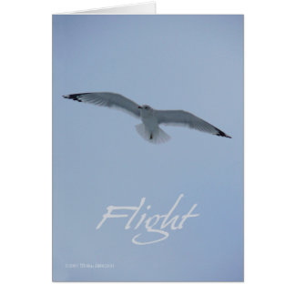 Sea Gull Flight Card
