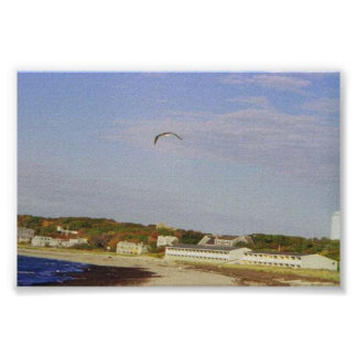 Sea Gull in flight over beach Poster