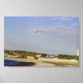 Sea Gull in flight over beach Poster