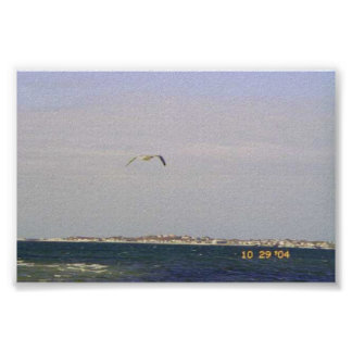 Sea Gull in flight over water Poster