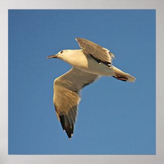 Sea Gull in Flight Poster