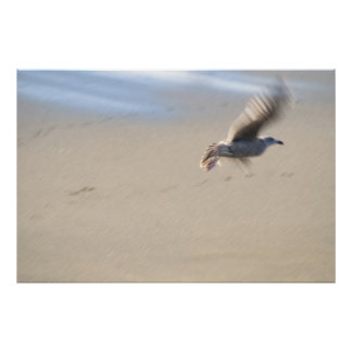 Sea gull in motion poster