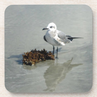 Sea Gull on Beach with Seaweed Drink Coasters