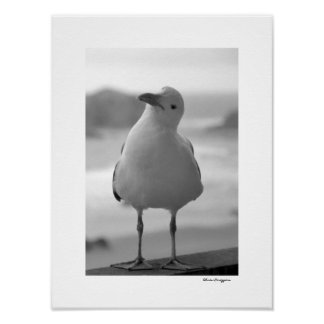 Sea Gull Posters