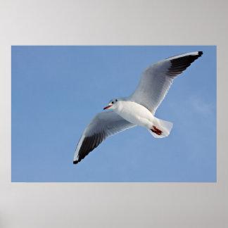 Sea gull/Sea gull Poster
