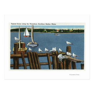 Sea Gulls and Sailboats Along the Waterfront Postcard