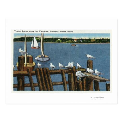 Sea Gulls and Sailboats Along the Waterfront Post Cards