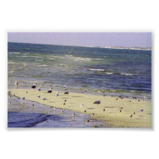 Sea Gulls and the tide Poster