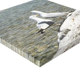 Sea Gulls on a Rock by Lake Michigan Canvas Print