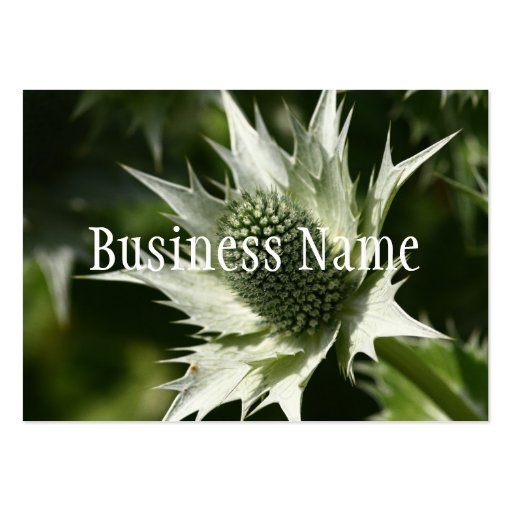Sea Holly  Business Card