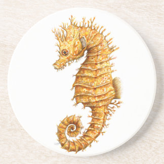 Sea horse Hippocampus hippocampus Coaster