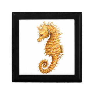 Sea horse Hippocampus hippocampus Gift Box
