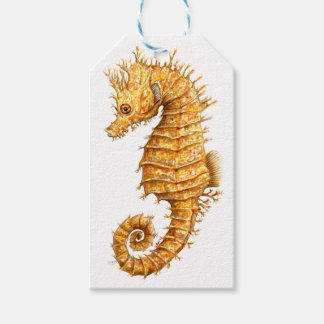 Sea horse Hippocampus hippocampus Gift Tags