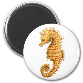 Sea horse Hippocampus hippocampus Magnet
