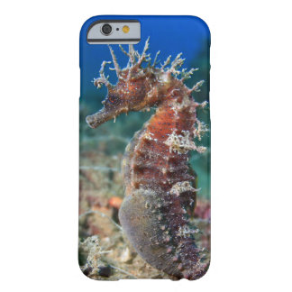 Sea Horse | Hippocampus Ramulosus Barely There iPhone 6 Case