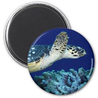 Sea Life - Sea Turtle 6 Cm Round Magnet