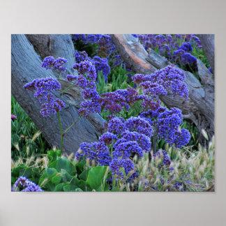 Sea Lilac Poster