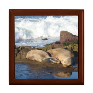 Sea Lion Admiring Itself Keepsake Box