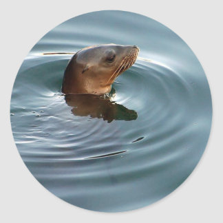 Sea Lion At Play Classic Round Sticker
