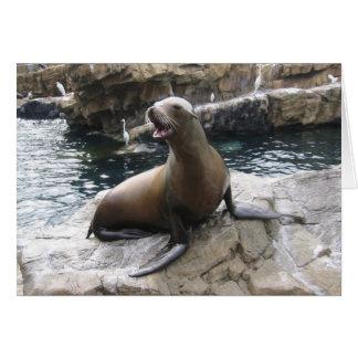 sea lion barking card