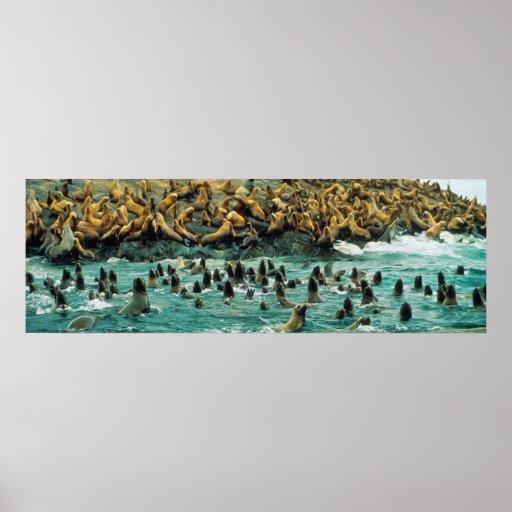 Sea Lion Beach Party Print