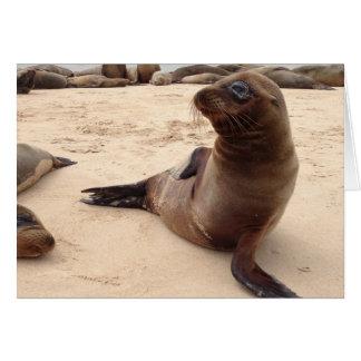 Sea Lion Blank Greeting Card