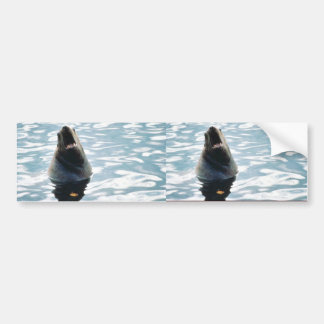 Sea Lion Bumper Sticker