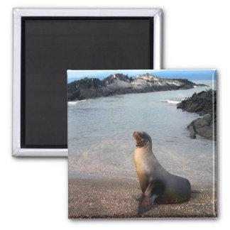 Sea Lion Galapagos Island Magnet