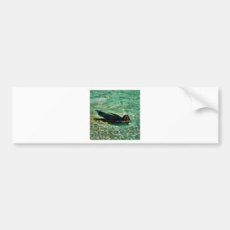 Sea Lion in Dreaming Aquatic World Bumper Sticker