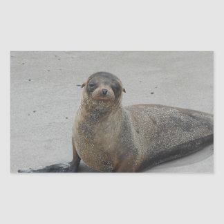 Sea Lion in the Galapagos Islands!! Rectangular Sticker