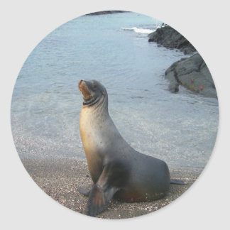 sea lion look forward to love and peace classic round sticker