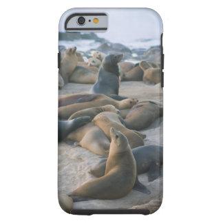Sea Lion Lounging Tough iPhone 6 Case